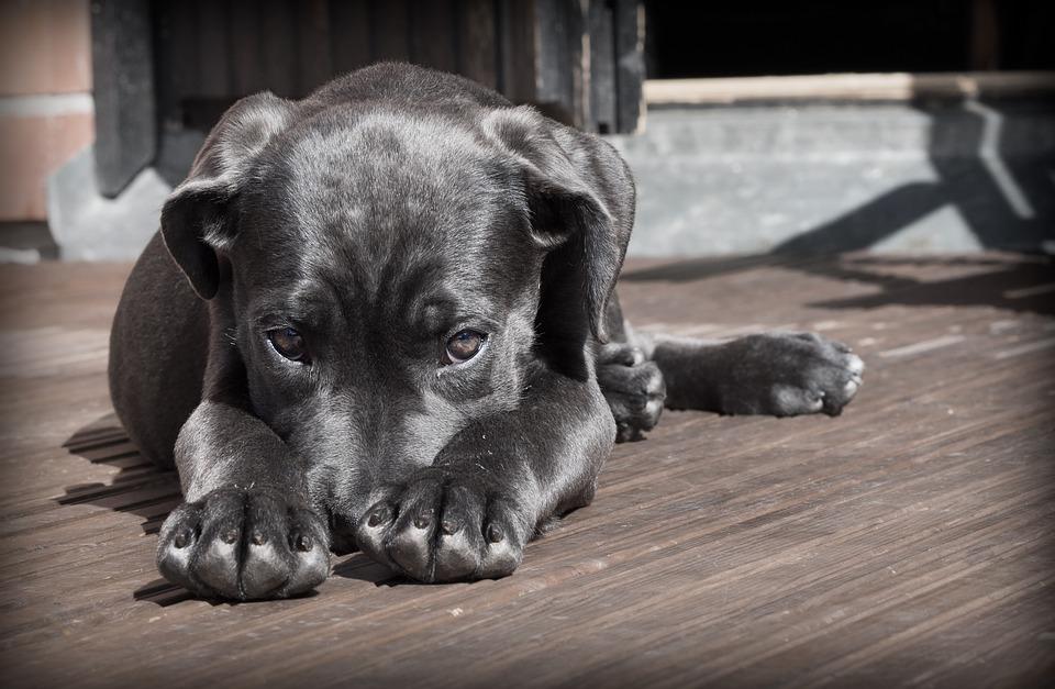 Le dressage pour chiens